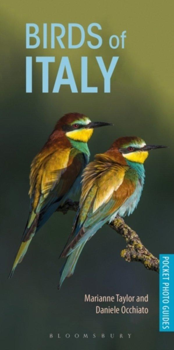 Birds of Italy | vogelgids Italië 9781472949820 Marianne Taylor, Daniele Occhiato Bloomsbury   Natuurgidsen, Vogelboeken Italië