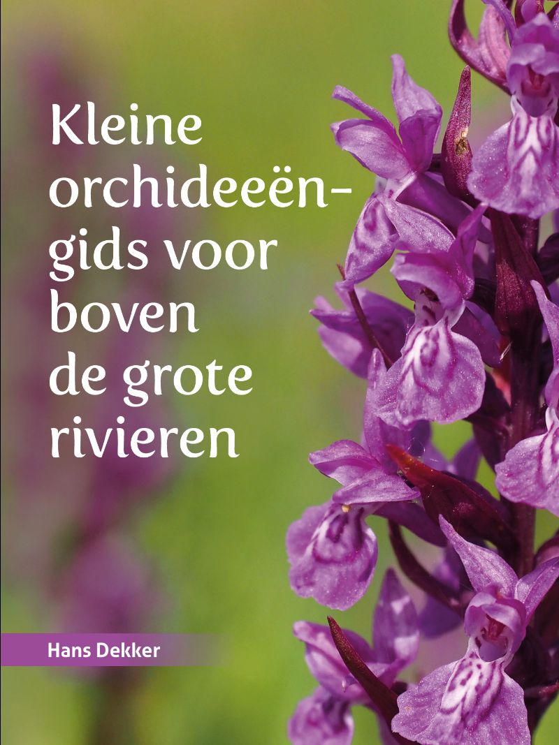 Kleine orchideeëngids voor boven de grote rivieren 9789023257288  Van Gorcum   Natuurgidsen, Plantenboeken Nederland