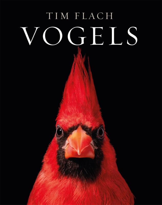 Vogels | Tim Flach 9789464040678  Fontaine   Natuurgidsen, Vogelboeken Wereld als geheel