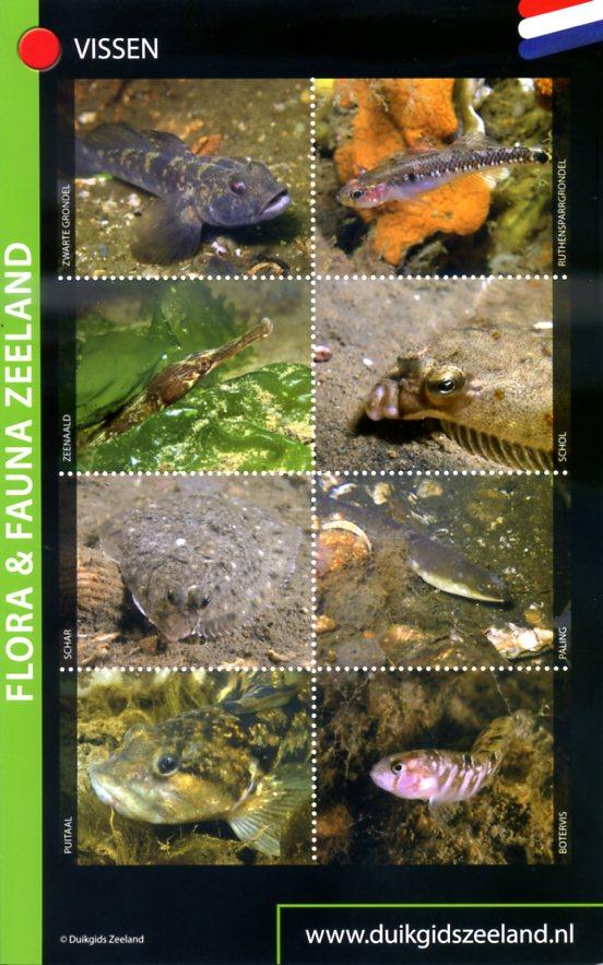 Flora & Fauna Zeeland - voor duikers en snorkelaars 10027519 Dolphins Dive Centre,  Marloes Otten Caribbean Diveguides   Duik sportgidsen Zeeland