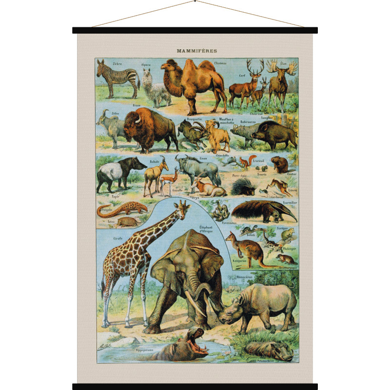 Mammifères | wandkaart Afrikaanse zoogdieren 5407004630762  Blue Shaker Cartes vintage  Natuurgidsen Afrika