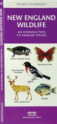 New England Wildlife 9781583551738  Waterford Press   Natuurgidsen New England