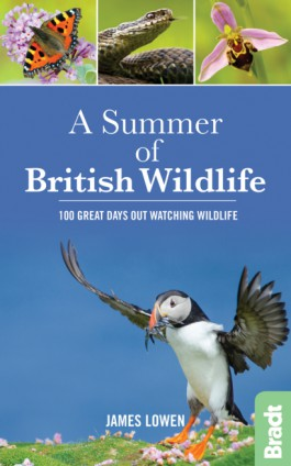A Summer of British Wildlife 9781784770099  Bradt   Natuurgidsen Groot-Brittannië