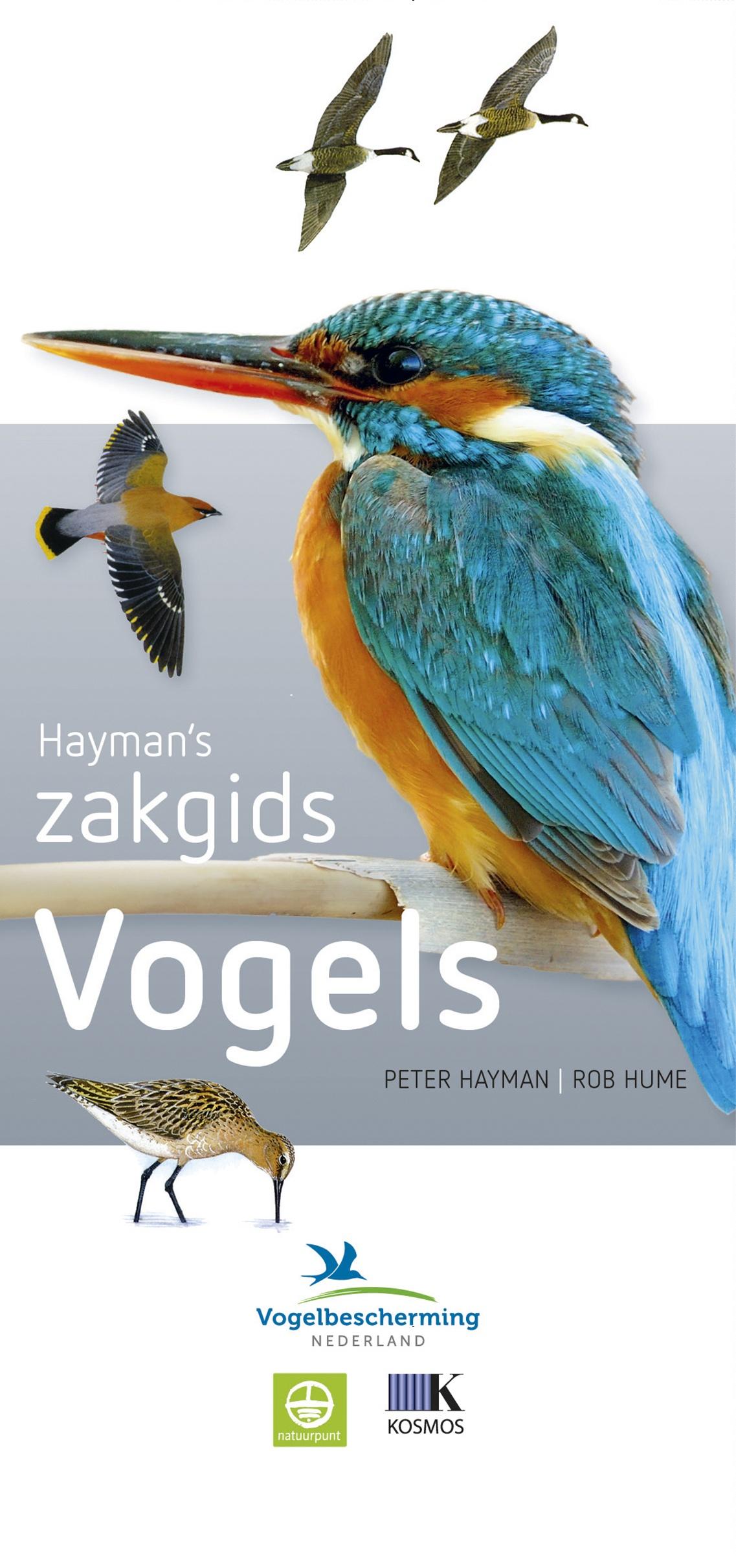 Haymans Zakgids Vogels van Europa 9789021564913 Peter Hayman, Rob Hume Kosmos Zakgidsen natuur  Natuurgidsen, Vogelboeken Europa