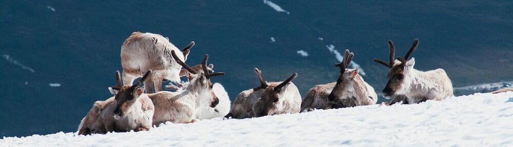 eland in noorwegen tijdens camperreis